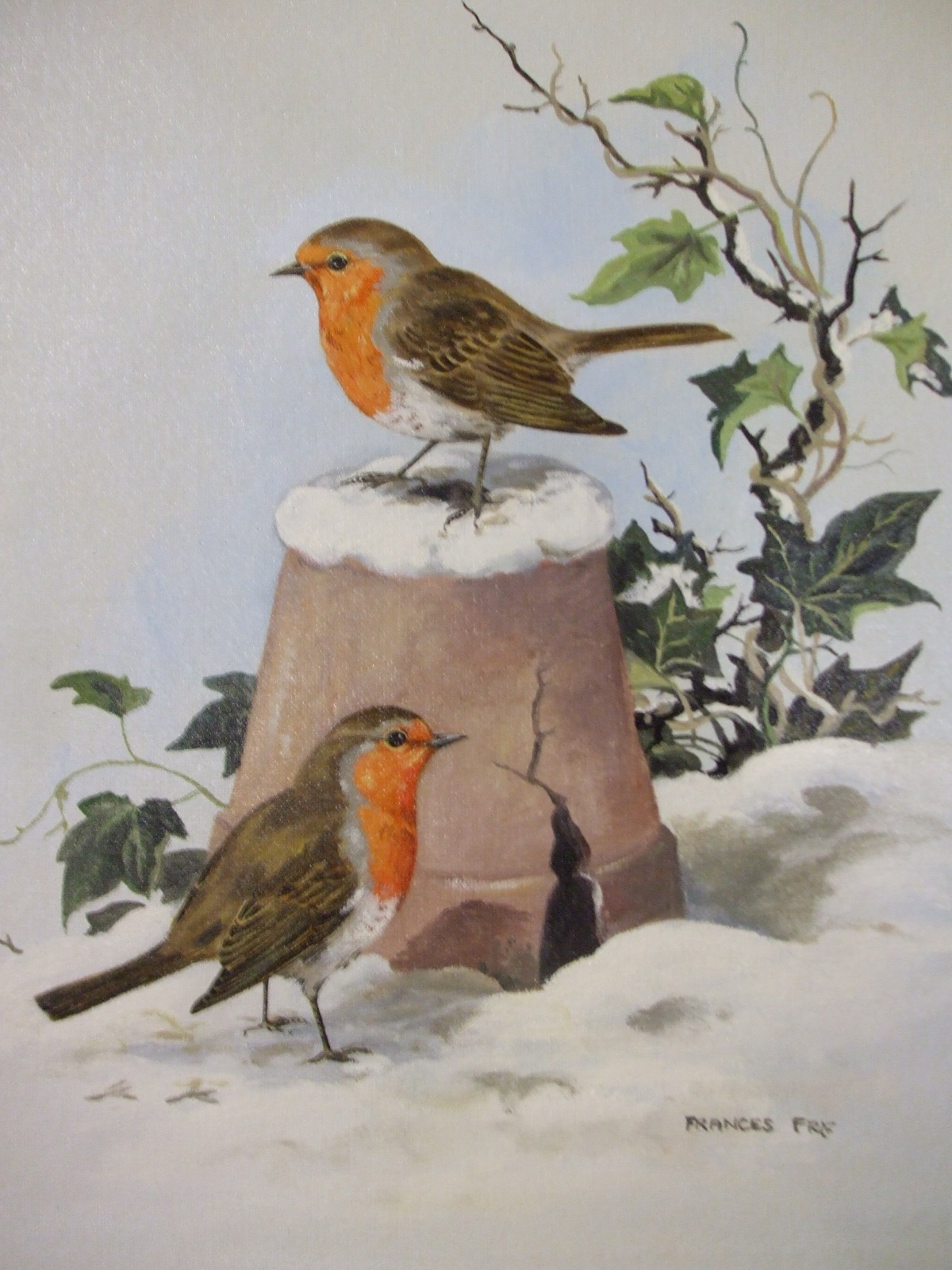 Robins In Snow Collect Ireland